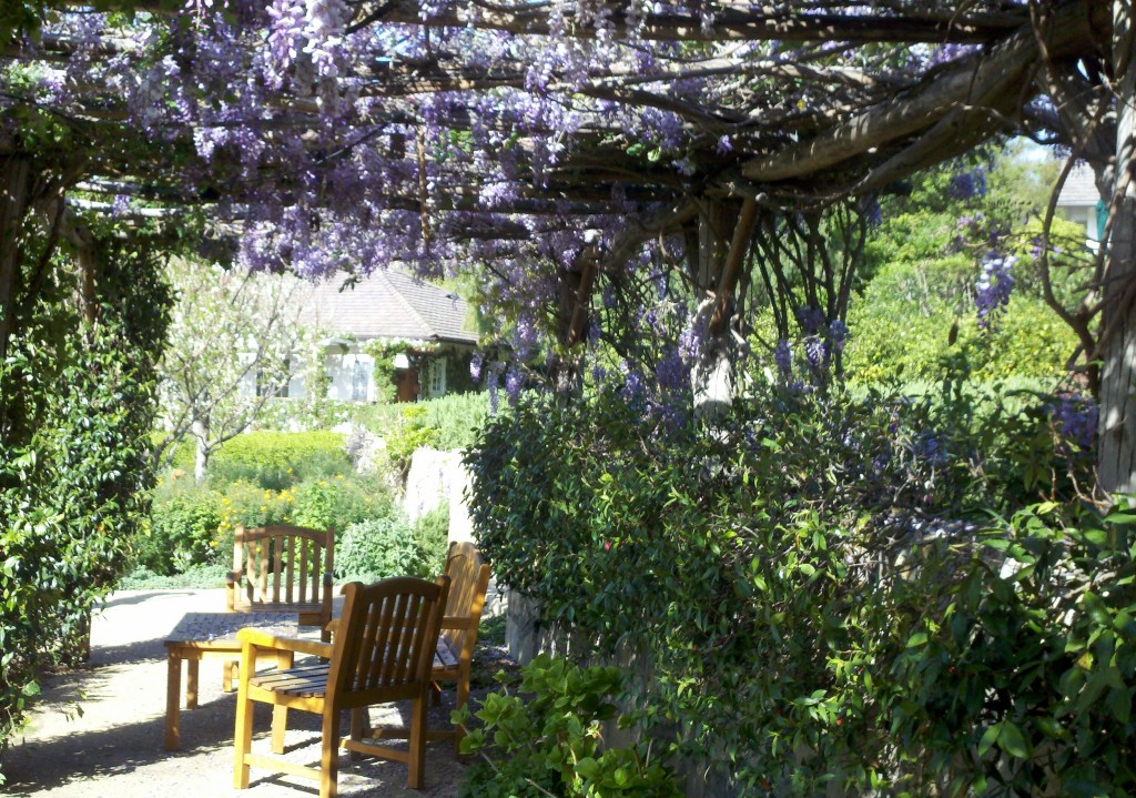 Wisteria at the San Ysidro Ranch